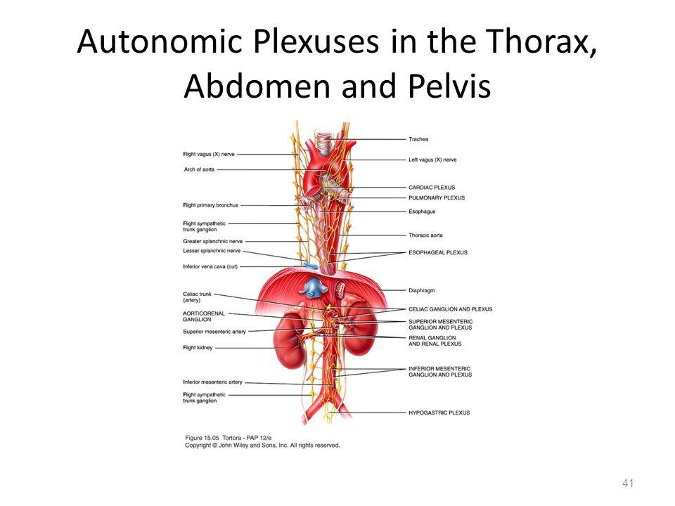 Autonomic Plexuses in the Thorax, Abdomen and Pelvis 41