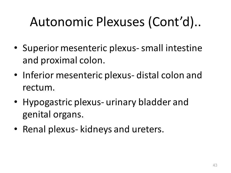 Autonomic Plexuses (Cont'd).. Superior mesenteric plexus- small intestine and proximal colon. Inferior mesenteric plexus- distal colon and rectum. Hyp
