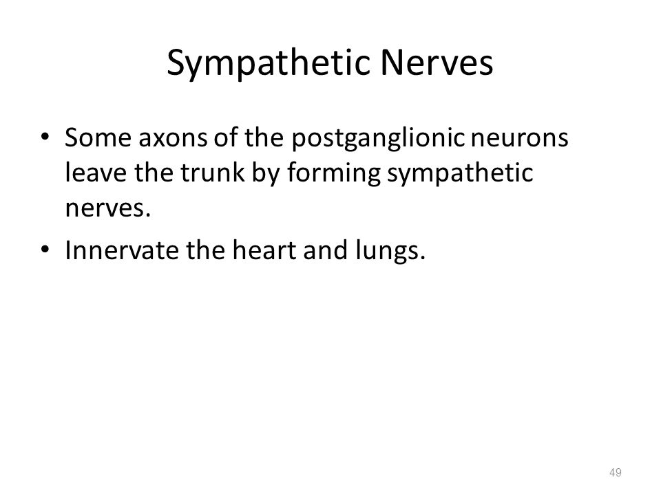 Sympathetic Nerves Some axons of the postganglionic neurons leave the trunk by forming sympathetic nerves. Innervate the heart and lungs. 49