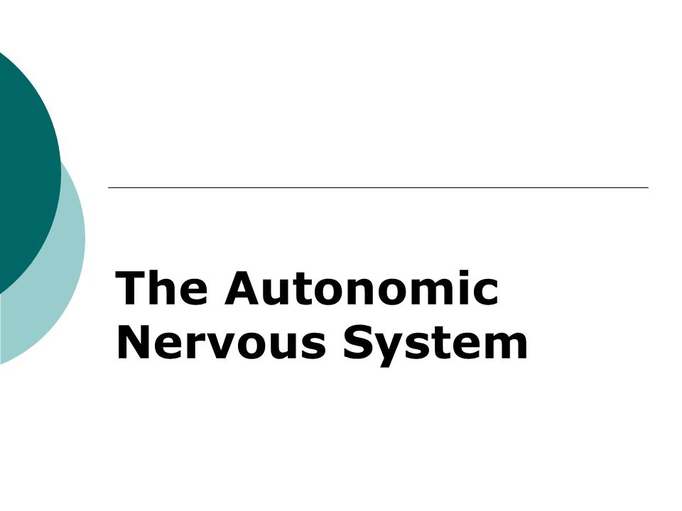 2 Autonomic Nervous System (ANS)  The ANS consists of motor neurons that: Innervate smooth and cardiac muscle and glands Make adjustments to ensure optimal support for body activities Operate via subconscious control Have viscera as most of their effectors