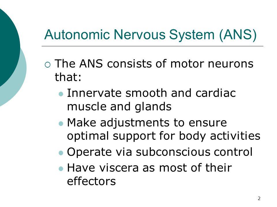 53 Adrenergic receptors  Beta 3  Adipose tissue  Excitatory