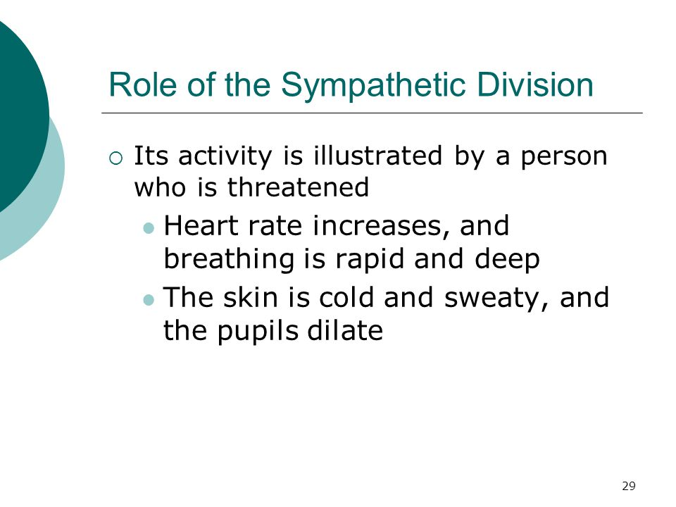 29 Role of the Sympathetic Division  Its activity is illustrated by a person who is threatened Heart rate increases, and breathing is rapid and deep