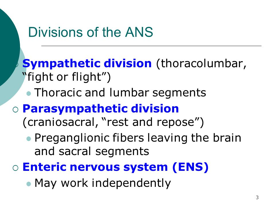 """3 Divisions of the ANS  Sympathetic division (thoracolumbar, """"fight or flight"""") Thoracic and lumbar segments  Parasympathetic division (craniosacral"""