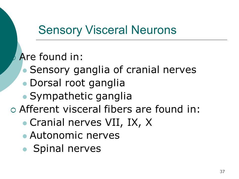 37 Sensory Visceral Neurons  Are found in: Sensory ganglia of cranial nerves Dorsal root ganglia Sympathetic ganglia  Afferent visceral fibers are f