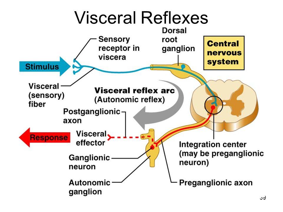 39 Visceral Reflexes