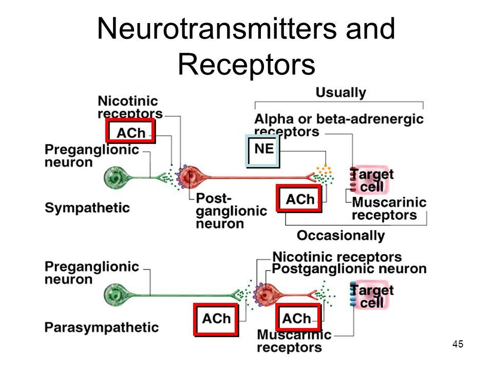 45 Neurotransmitters and Receptors