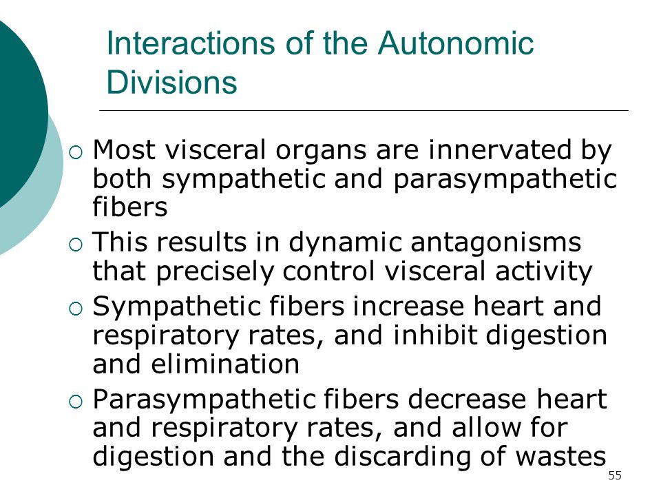 55 Interactions of the Autonomic Divisions  Most visceral organs are innervated by both sympathetic and parasympathetic fibers  This results in dyna