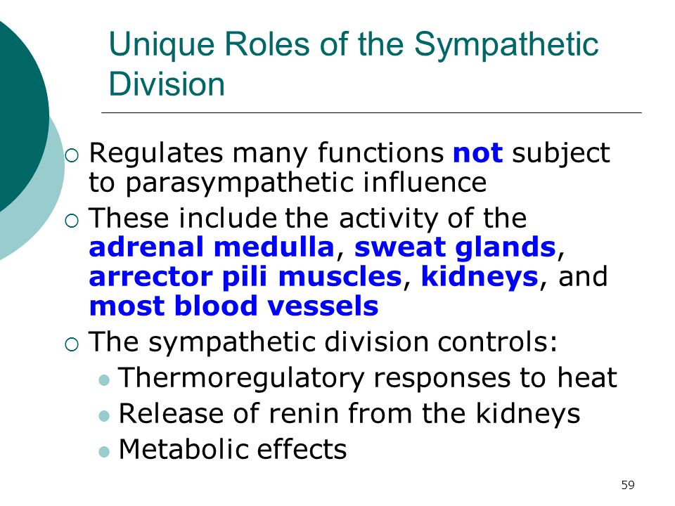 59 Unique Roles of the Sympathetic Division  Regulates many functions not subject to parasympathetic influence  These include the activity of the ad