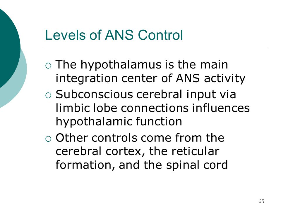65 Levels of ANS Control  The hypothalamus is the main integration center of ANS activity  Subconscious cerebral input via limbic lobe connections i