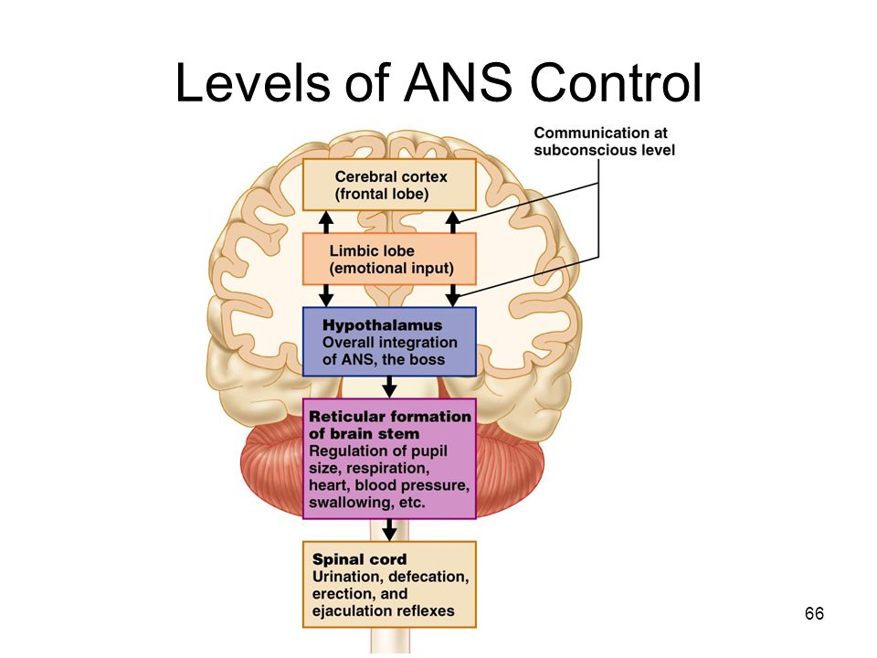 66 Levels of ANS Control