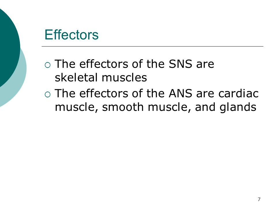 7 Effectors  The effectors of the SNS are skeletal muscles  The effectors of the ANS are cardiac muscle, smooth muscle, and glands