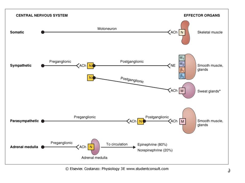 10 Neurotransmitters and Receptors