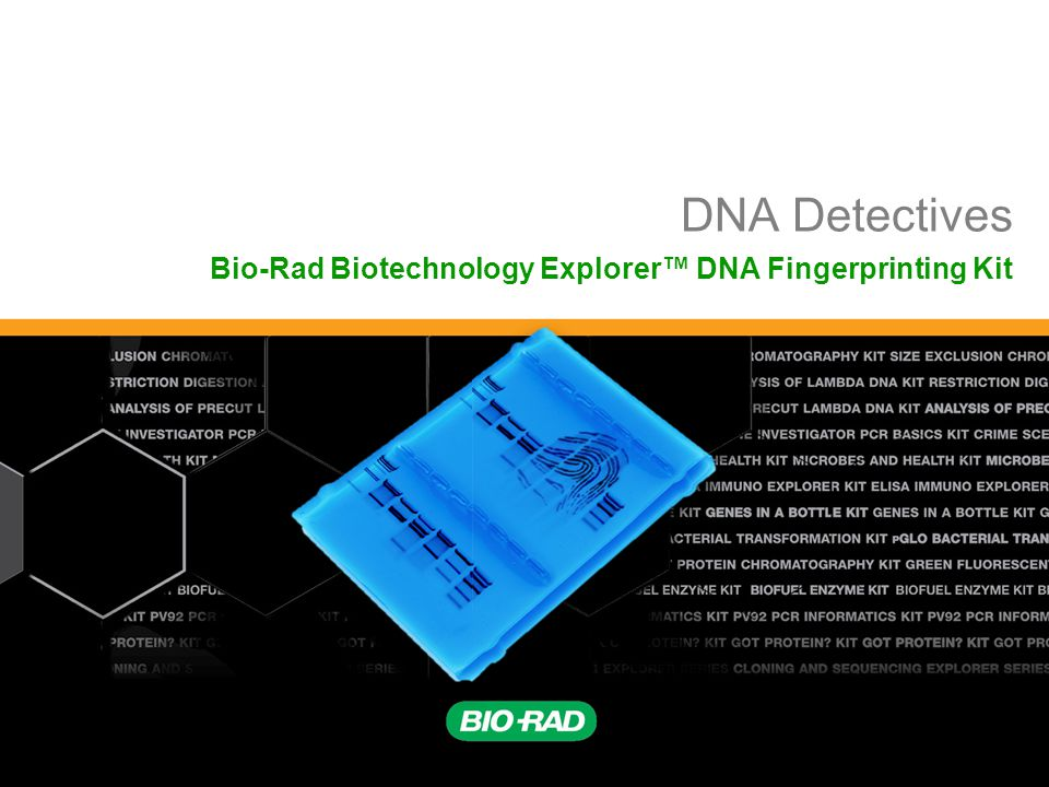 Biotechnology Explorer™ | explorer.bio-rad.com 22 Restriction Fragment Length Polymorphism RFLP Allele 1 Allele 2 GAATTC GTTAAC GAATTC GTTAAC CTGCAG GAGCTC CGGCAG GCGCTC PstIEcoRI 123 3 Fragment 1+2 Different Base Pairs No restriction site + MA-1A-2 Electrophoresis of restriction fragments M: Marker A-1: Allele 1 Fragments A-2: Allele 2 Fragments
