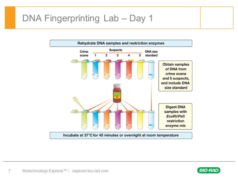 Biotechnology Explorer™ | explorer.bio-rad.com 8 DNA Fingerprinting Lab – Day 2