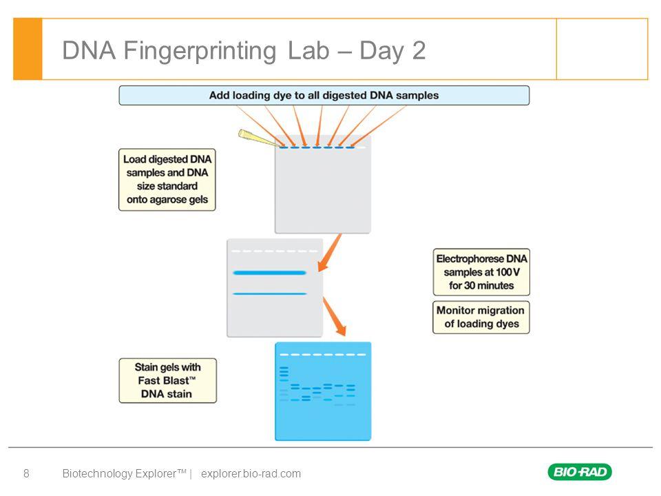 Biotechnology Explorer™ | explorer.bio-rad.com 9 DNA Fingerprinting Lab – Day 3