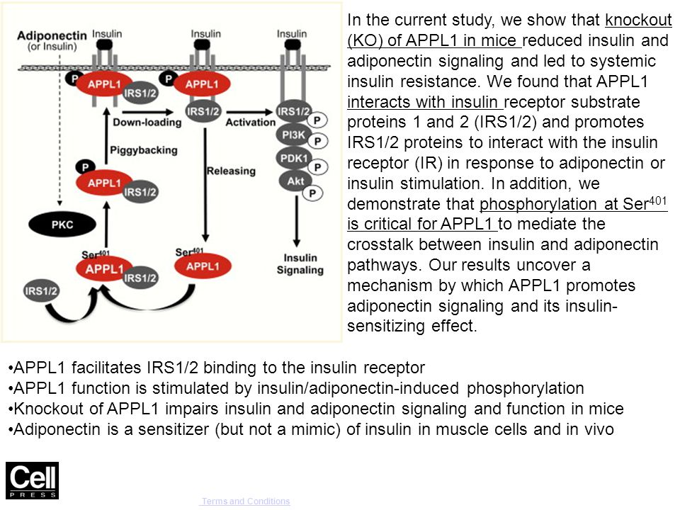 Cell Reports , DOI: ( /j.celrep ) Copyright © 2014 The Authors Terms and Conditions Terms and Conditions In the current study, we show that knockout (KO) of APPL1 in mice reduced insulin and adiponectin signaling and led to systemic insulin resistance.