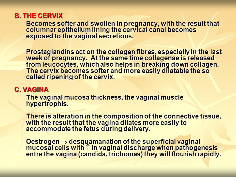 B. THE CERVIX Becomes softer and swollen in pregnancy, with the result that columnar epithelium lining the cervical canal becomes exposed to the vagin