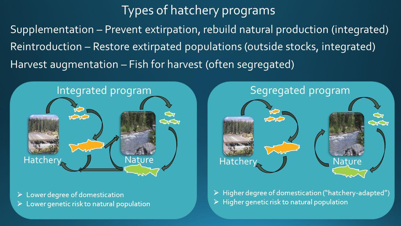 Harvest augmentation – Fish for harvest (often segregated) Reintroduction – Restore extirpated populations (outside stocks, integrated) Supplementatio