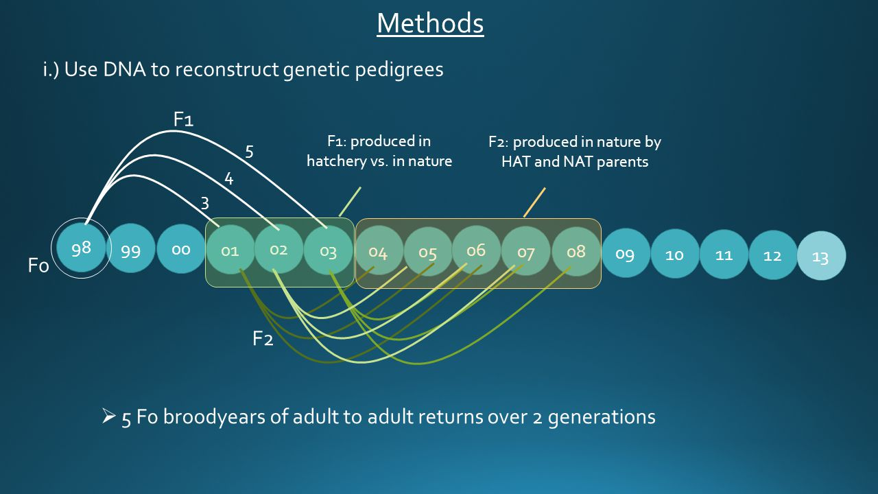  5 F0 broodyears of adult to adult returns over 2 generations i.) Use DNA to reconstruct genetic pedigrees 99 01 02 03 04 05 06 07 08 09 10 98 00 11