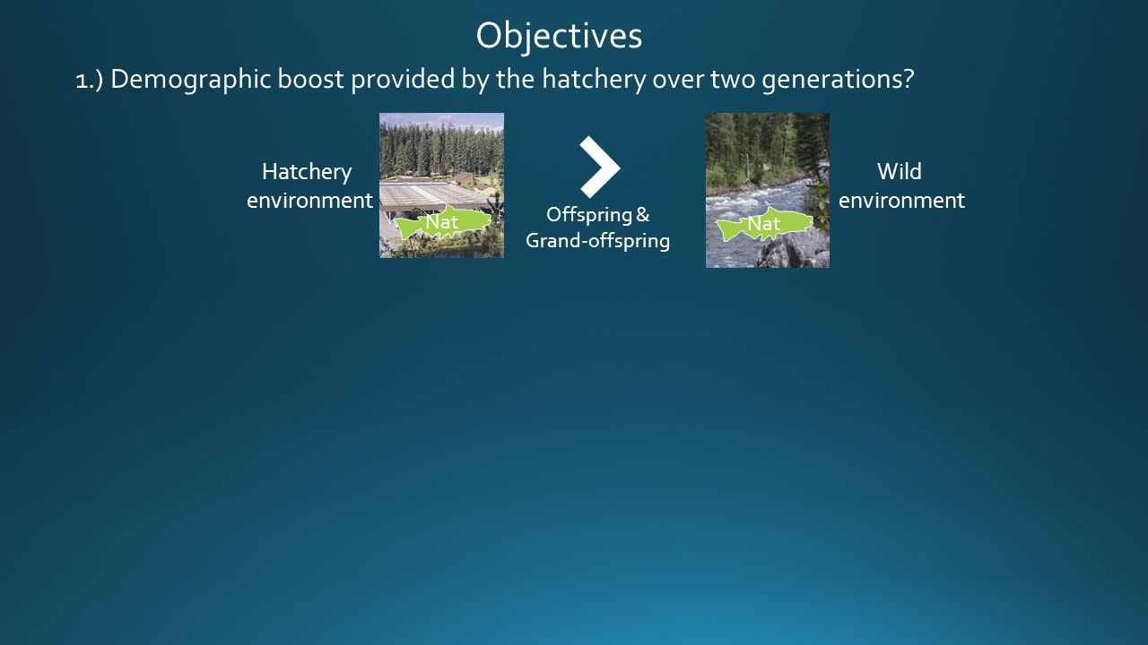 Objectives Nat Hatchery environment Nat Wild environment Offspring & Grand-offspring 1.) Demographic boost provided by the hatchery over two generatio
