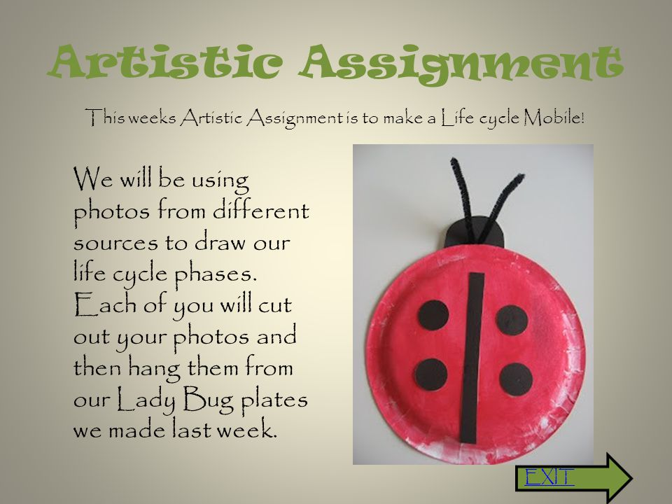 Artistic Assignment This weeks Artistic Assignment is to make a Life cycle Mobile .