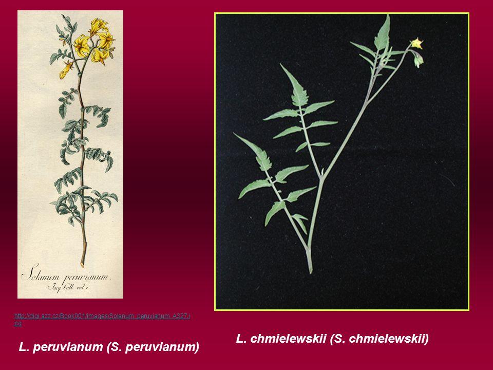 L. peruvianum (S. peruvianum) L. chmielewskii (S.