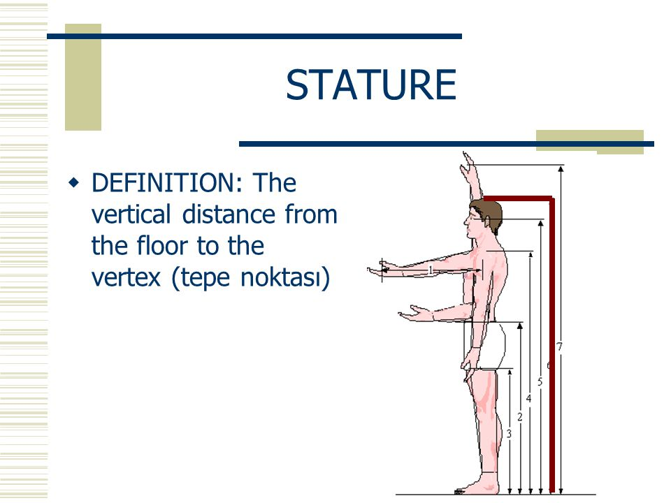 STATURE  DEFINITION: The vertical distance from the floor to the vertex (tepe noktası)