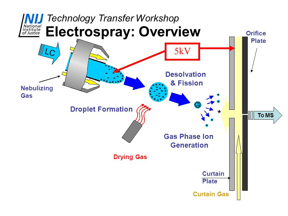 Technology Transfer Workshop Electrospray: Overview To MS Orifice Plate Curtain Plate Drying Gas Curtain Gas LC Droplet Formation Desolvation & Fissio