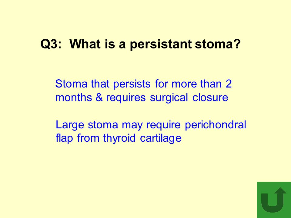 Q3:What is a persistant stoma? Stoma that persists for more than 2 months & requires surgical closure Large stoma may require perichondral flap from t