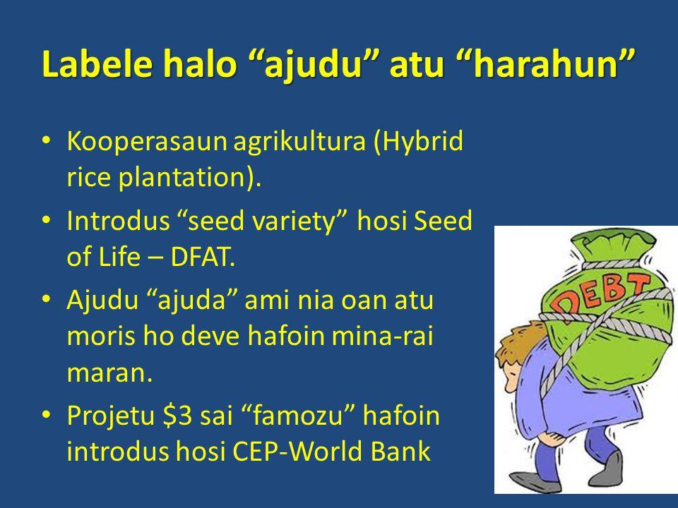 Labele halo ajudu atu harahun Kooperasaun agrikultura (Hybrid rice plantation).