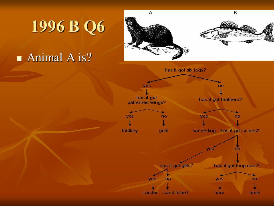 1996 B Q6 Animal B is? Animal B is?