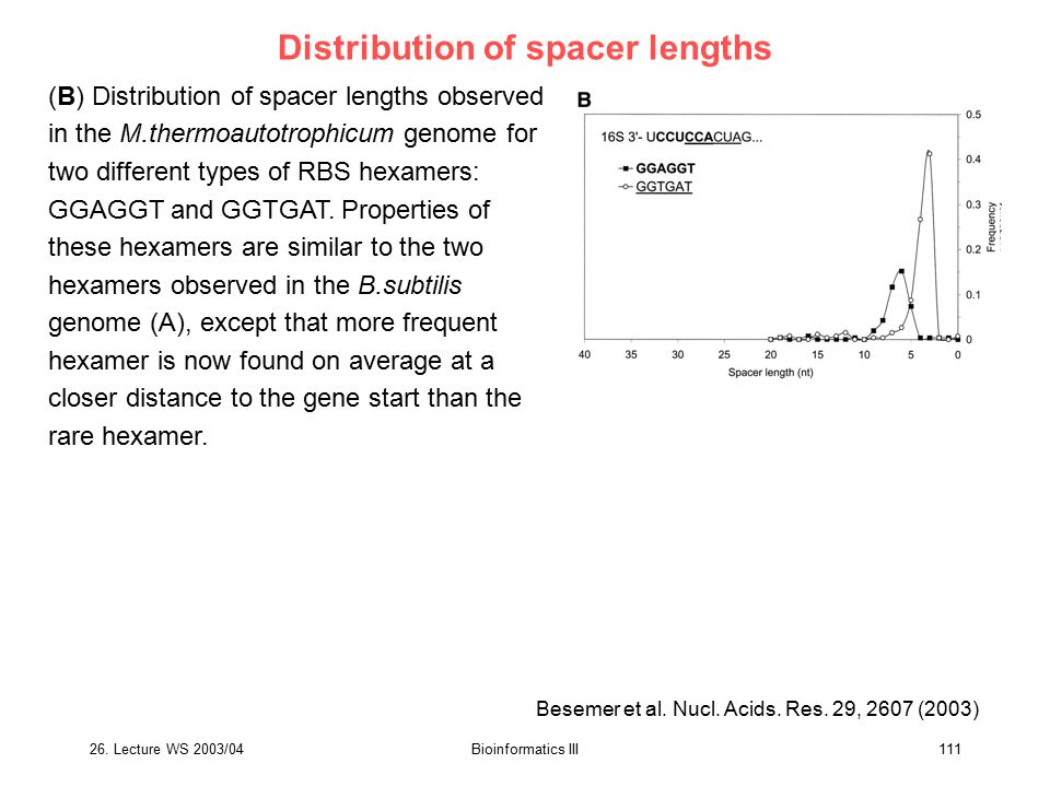 26. Lecture WS 2003/04Bioinformatics III111 Distribution of spacer lengths (B) Distribution of spacer lengths observed in the M.thermoautotrophicum ge