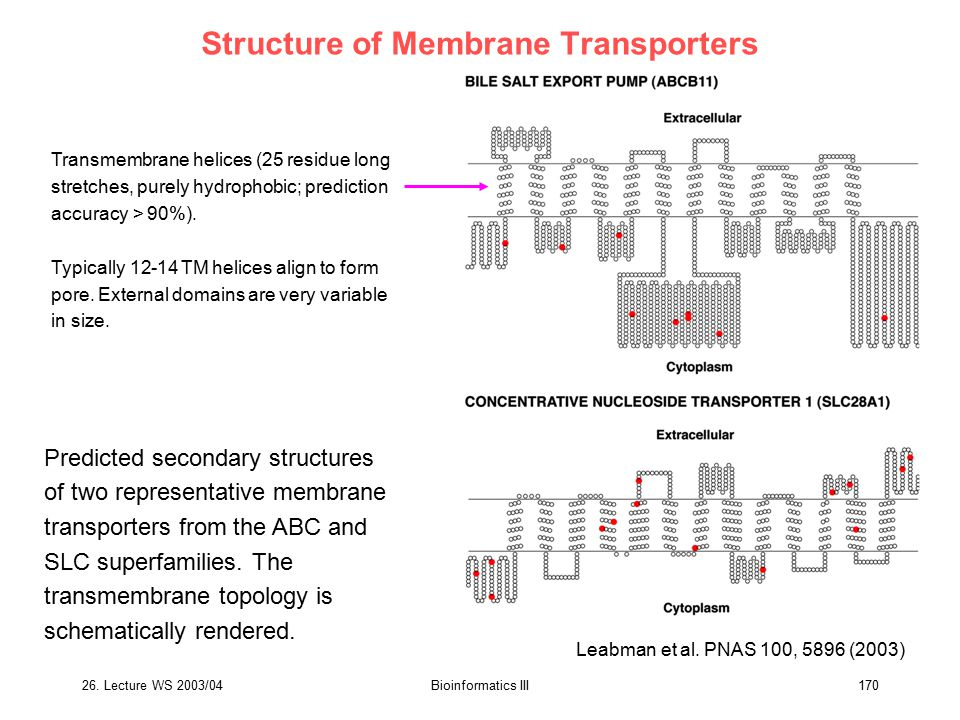 26. Lecture WS 2003/04Bioinformatics III170 Structure of Membrane Transporters Predicted secondary structures of two representative membrane transport