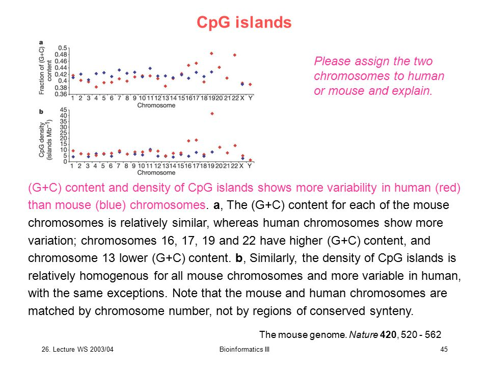 26. Lecture WS 2003/04Bioinformatics III45 The mouse genome. Nature 420, 520 - 562 CpG islands (G+C) content and density of CpG islands shows more var