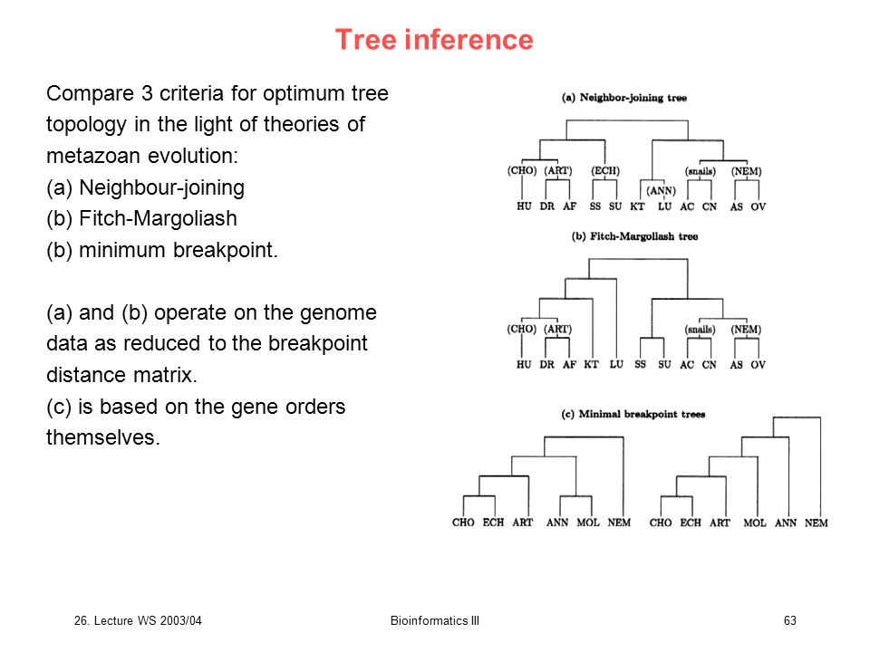 26. Lecture WS 2003/04Bioinformatics III63 Tree inference Compare 3 criteria for optimum tree topology in the light of theories of metazoan evolution: