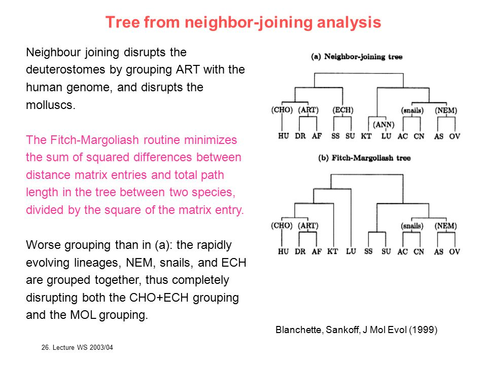 26. Lecture WS 2003/04Bioinformatics III64 Tree from neighbor-joining analysis Neighbour joining disrupts the deuterostomes by grouping ART with the h