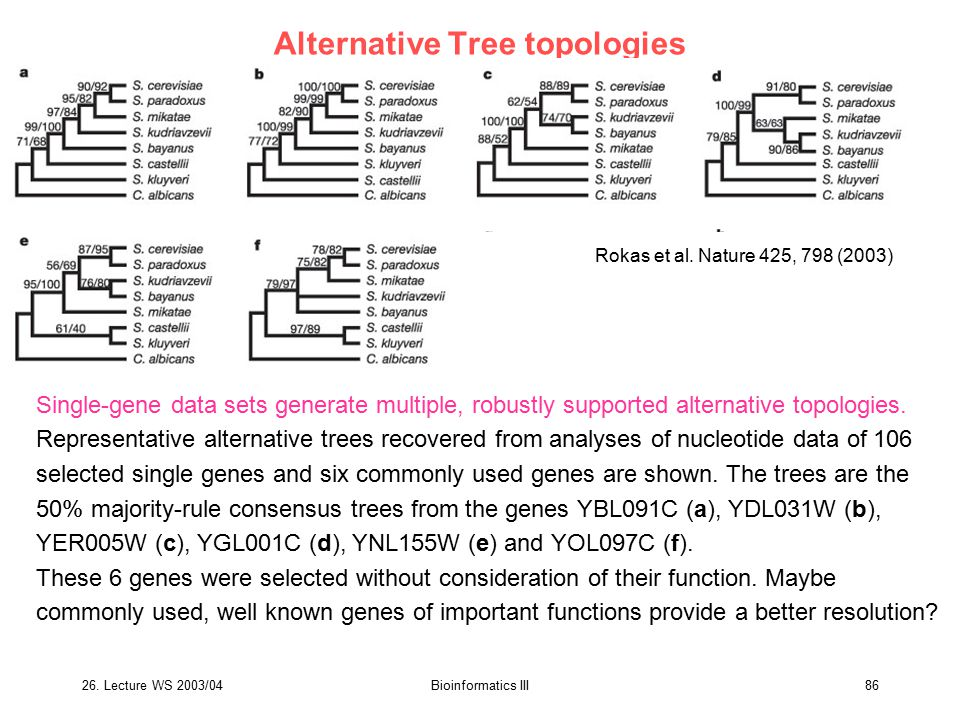 26. Lecture WS 2003/04Bioinformatics III86 Alternative Tree topologies Single-gene data sets generate multiple, robustly supported alternative topolog