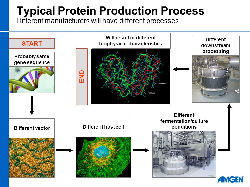 Typical Protein Production Process Probably same gene sequence START Different vectorDifferent host cell Different fermentation/culture conditions Dif