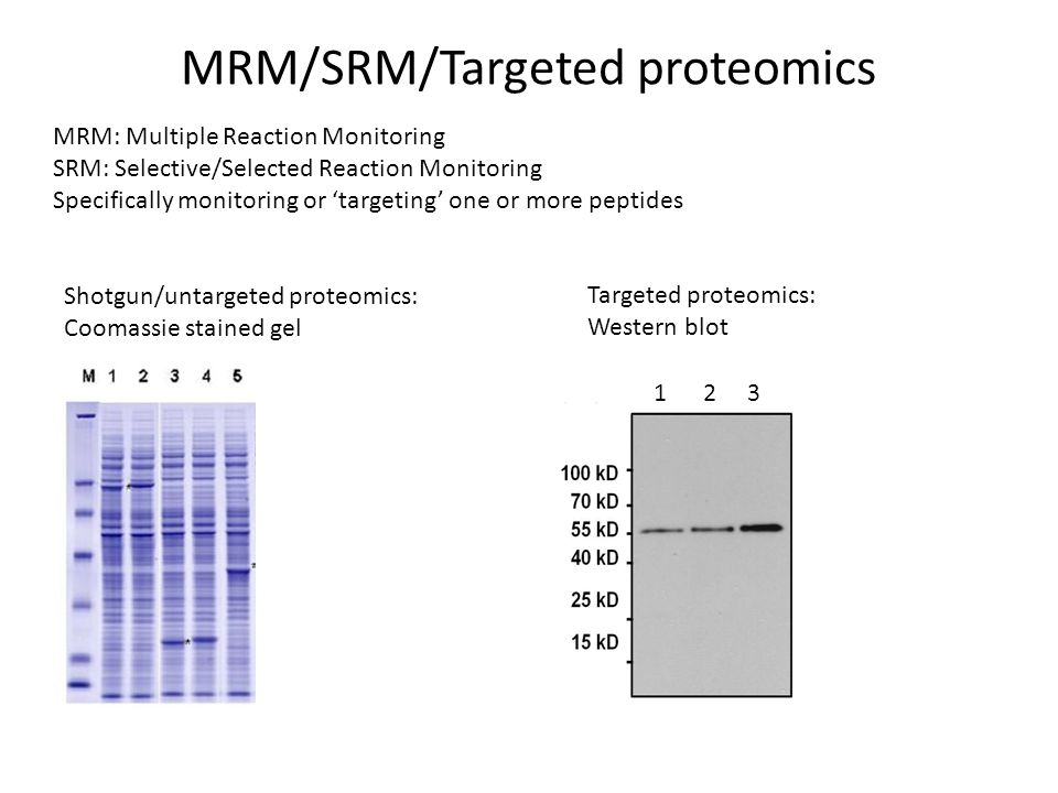 MRM/SRM/Targeted proteomics MRM: Multiple Reaction Monitoring SRM: Selective/Selected Reaction Monitoring Specifically monitoring or 'targeting' one or more peptides 1 2 3 Shotgun/untargeted proteomics: Coomassie stained gel Targeted proteomics: Western blot -Indiscriminately identifies most abundant proteins -No prior knowledge required for protein detection -Information obtained for a large number of proteins -Selectively targets one protein -Requires prior knowledge of protein mass/sequence -Limited number of proteins can be assays at once (<150) -Improved sensitivity.