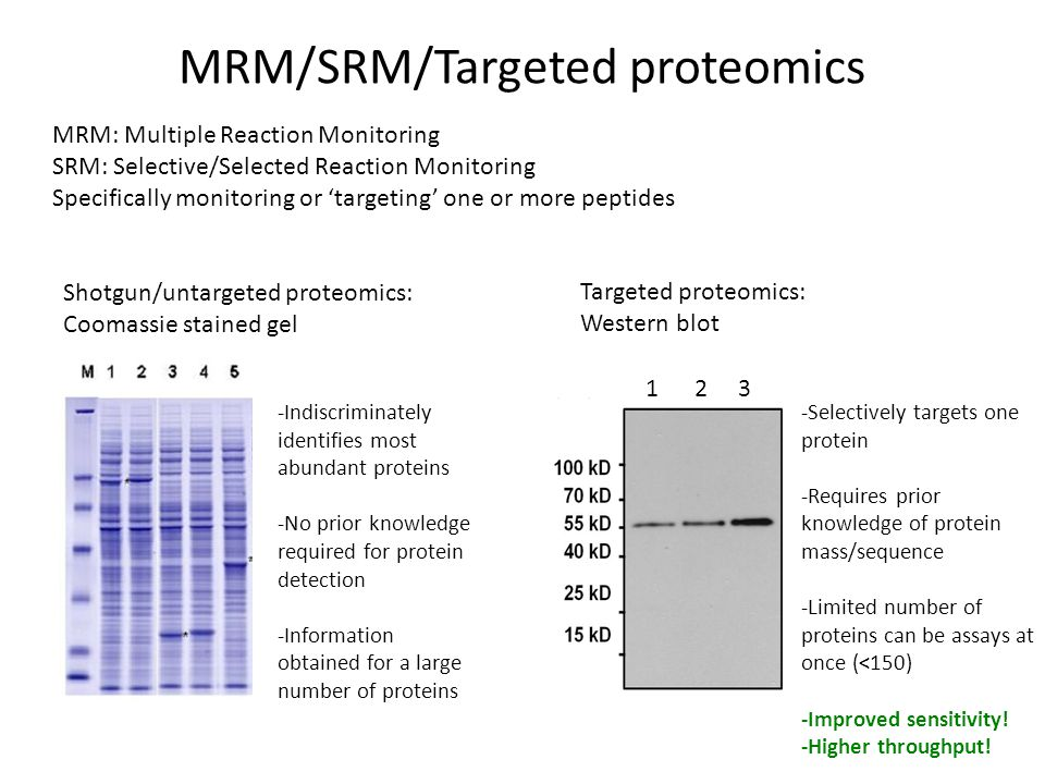 Useful references A complete mass-spectrometric map of the yeast proteome applied to quantitative trait analysis. Paola Picotti, (lots of authors) Reudi Aebersold (2013) Nature Selected reaction monitoring–based proteomics: workflows, potential, pitfalls and future directions. Paola Picotti & Ruedi Aebersold (2012) Nature Methods Selected reaction monitoring for quantitative proteomics: a tutorial. Vinzenz Lange, Paola Picotti, Bruno Domon and Ruedi Aebersold (2008) Molecular Systems Biology 4:222 Arabidopsis SRM data from our lab Stecker KE et al.