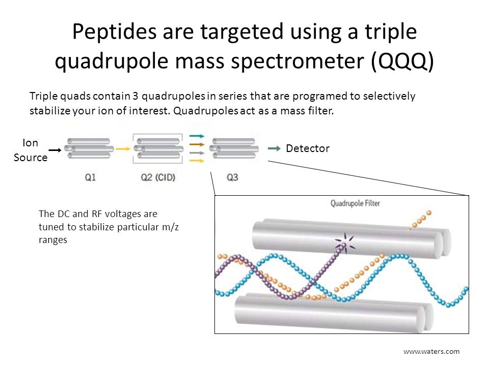 SRM analysis uses 2 stages of mass filtering Ion Source Detector Fragmentation Q1q2Q3 Q1: Peptide mass is selected (parent ion) q2: peptide is fragmented via collision induced dissociation Q3: Peptide fragment is selected (fragment ion) Parent ion to fragment ion mass change is called a transition Usually ≥ 3 transitions are monitored for each peptide of interest