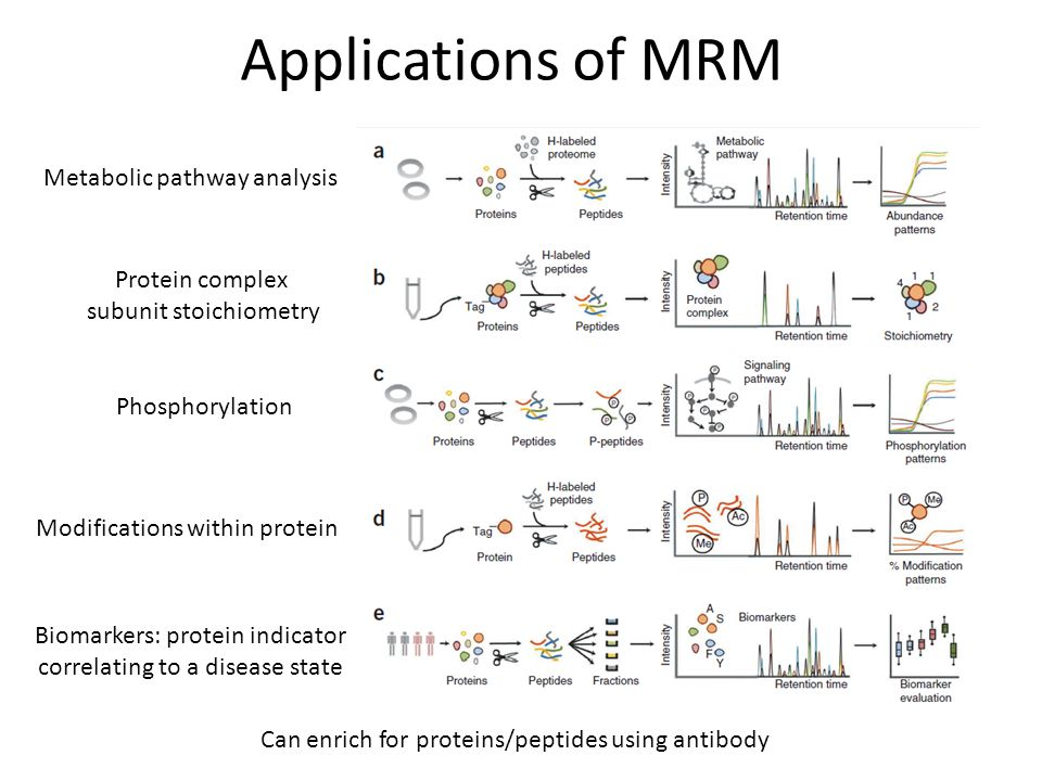 Applications of MRM Protein complex subunit stoichiometry Metabolic pathway analysis Phosphorylation Modifications within protein Biomarkers: protein