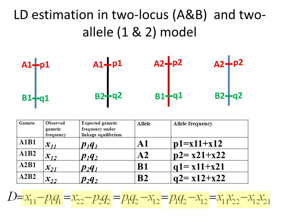 LD estimation in two-locus (A&B) and two- allele (1 & 2) model A1 A2 B1 B2B1 B2 p1 p2 q1 q2q1 q2 GameteObserved gametic frequency Expected gametic frequency under linkage equilibrium AlleleAllele frequency A1B1 x 11 p1q1p1q1 A1p1=x11+x12 A1B2 x 12 p1q2p1q2 A2p2= x21+x22 A2B1 x 21 p2q1p2q1 B1q1= x11+x21 A2B2 x 22 p2q2p2q2 B2q2= x12+x22