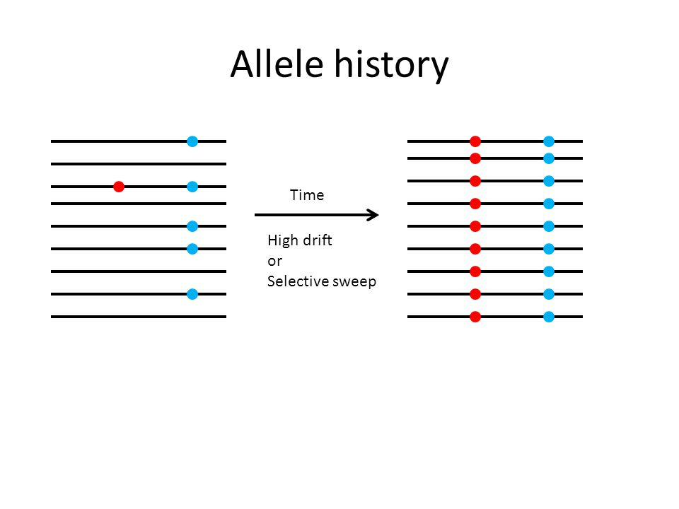 Allele history High drift or Selective sweep Time