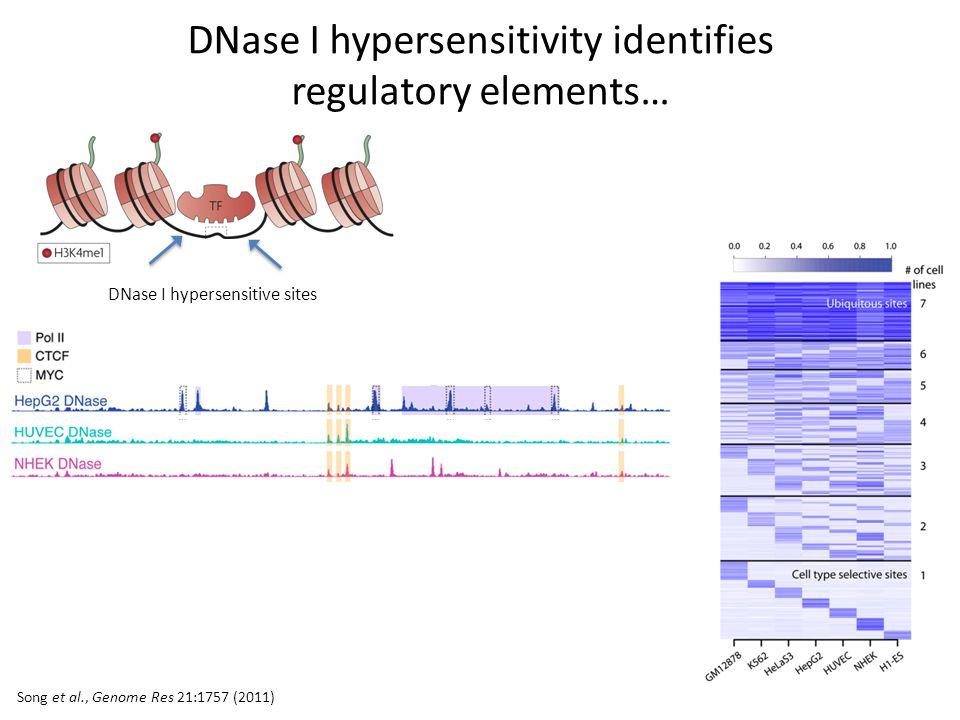 Song et al., Genome Res 21:1757 (2011) DNase I hypersensitivity identifies regulatory elements… DNase I hypersensitive sites