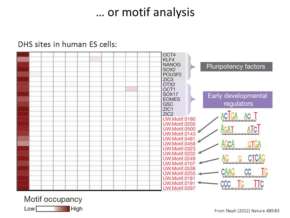 DHS sites in human ES cells: From Neph (2012) Nature 489:83 … or motif analysis
