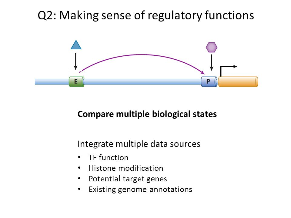 Q2: Making sense of regulatory functions Integrate multiple data sources TF function Histone modification Potential target genes Existing genome annot