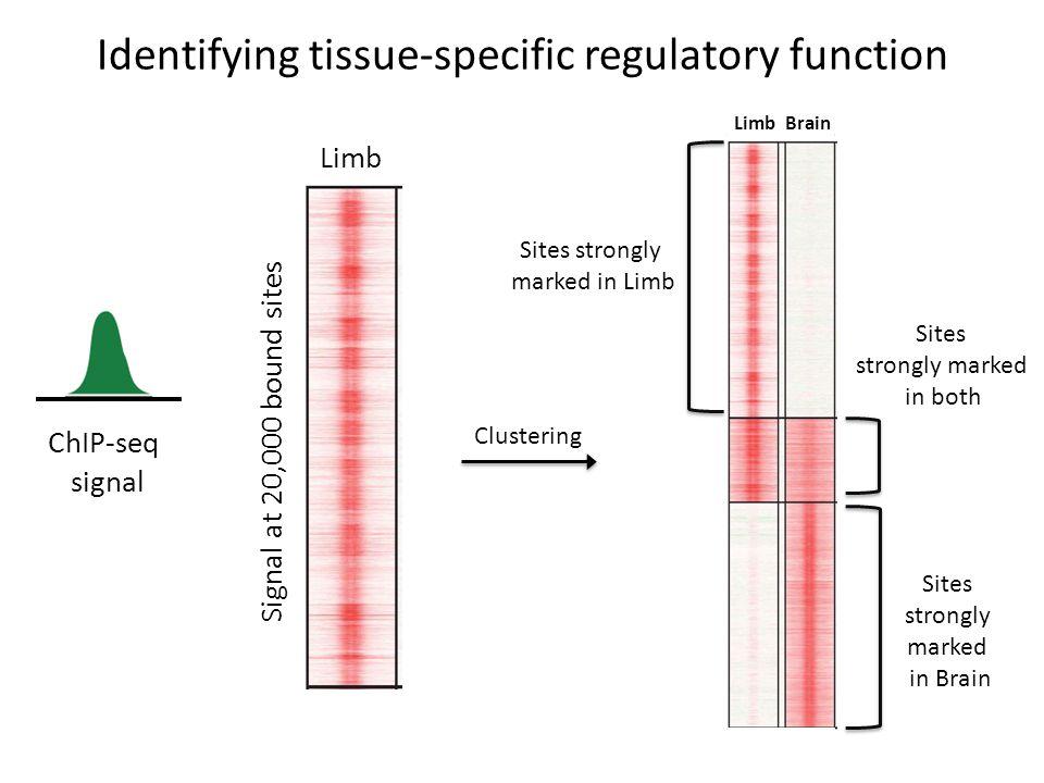 Identifying tissue-specific regulatory function ChIP-seq signal Signal at 20,000 bound sites Limb Brain Sites strongly marked in Limb Sites strongly m