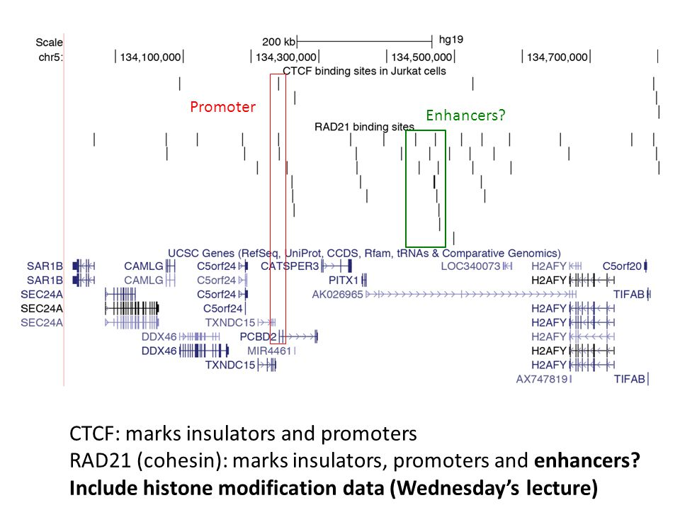 CTCF: marks insulators and promoters RAD21 (cohesin): marks insulators, promoters and enhancers? Include histone modification data (Wednesday's lectur