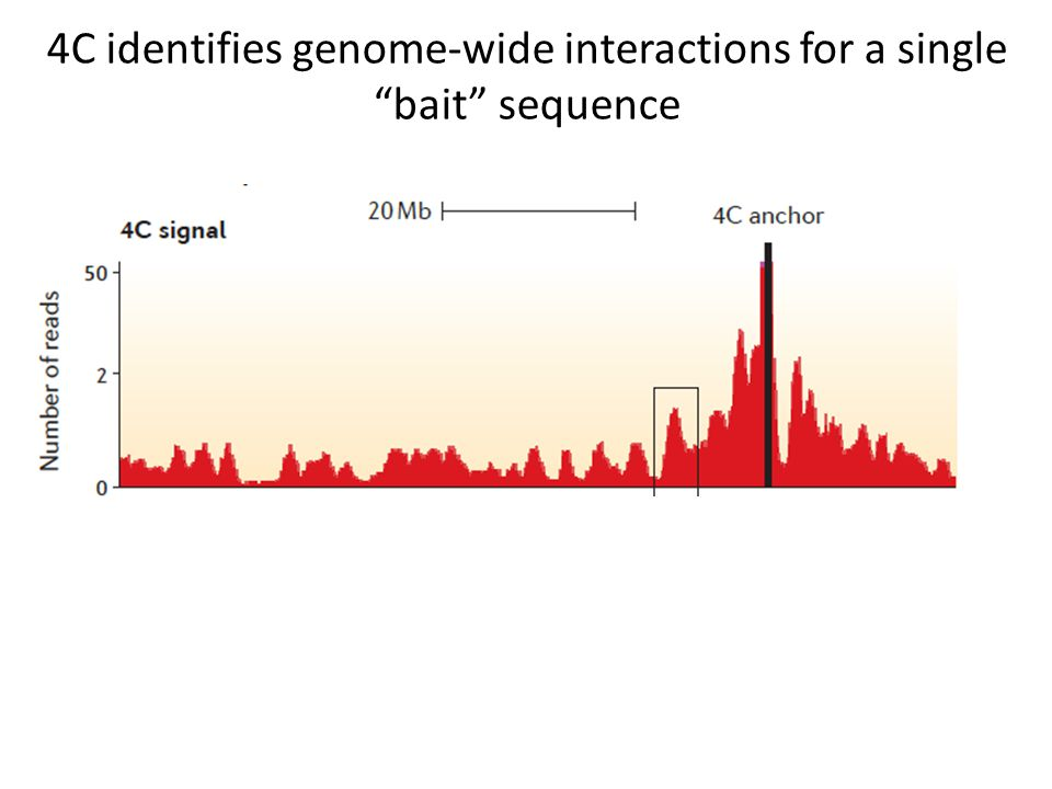 """4C identifies genome-wide interactions for a single """"bait"""" sequence"""